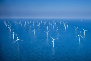 Will we soon be eating oysters from our offshore wind farms?